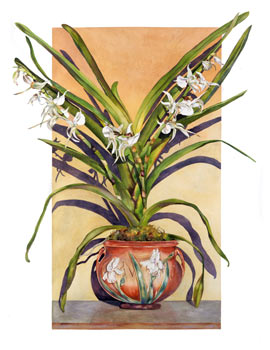 Angraecum in Arts & Crafts Pot
