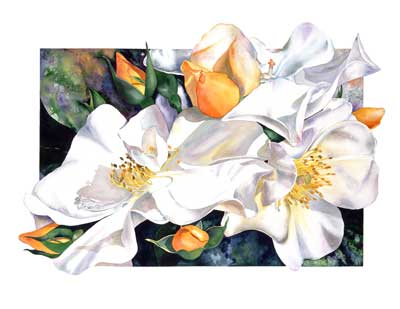 Sally Robertson BOtanical Print of Sally Holmes Rose