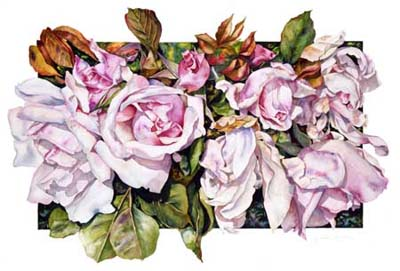 Botanical Rose print of Belle of Portugal Rose by Sally Robertson