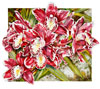 Cymbidium Winter Fire