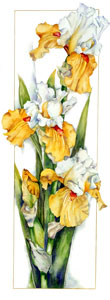 Iris_Foundation_VanGogh_Print