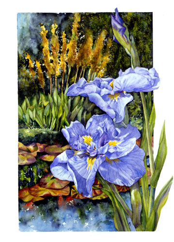 Japanese Iris by the Pond watercolor
