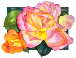 Botanical Print of CHicago Peace Rose by Sally Robertson