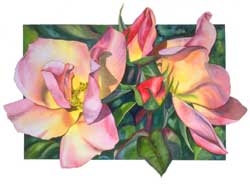 Botanical Rose Print of Maytime Rose by Sally Robertson