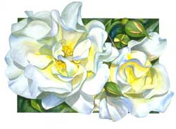 Sally Robertson Botanical Print of Windrush Rose